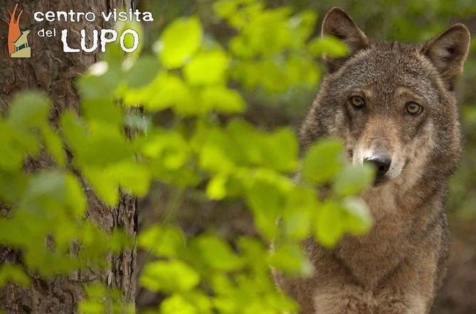 Wolf Besøgscenter - Omvisning