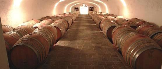 Wine Tour & Tasting at Cantina Avanzi
