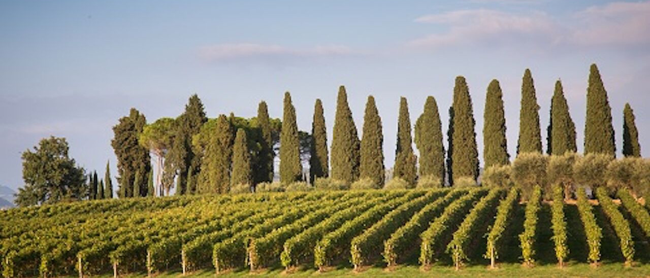 Amarone wine trail tour