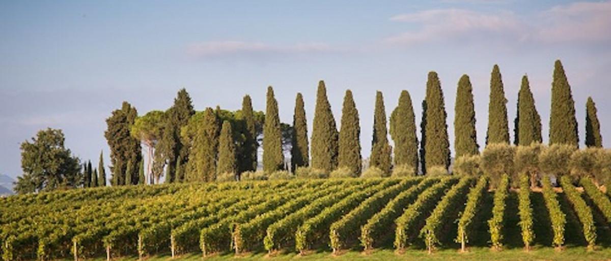 Verona Amarone classico wine tour