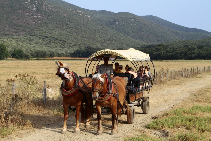 Sunset Carriage Tour - Parco dell'Uccellina