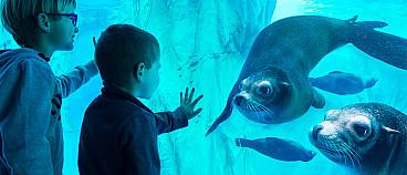 Sealife Garda
