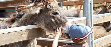 Moira's Donkey Farm Tour