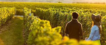 Conti Thun Winery - Wine Tour Valtènesi