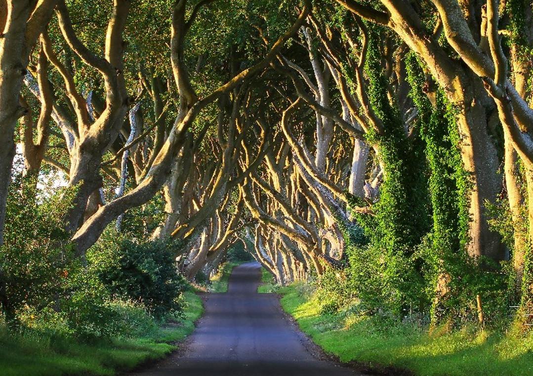 Giant's Causeway & Nordirlands højdepunkter: Rundtur fra Dublin
